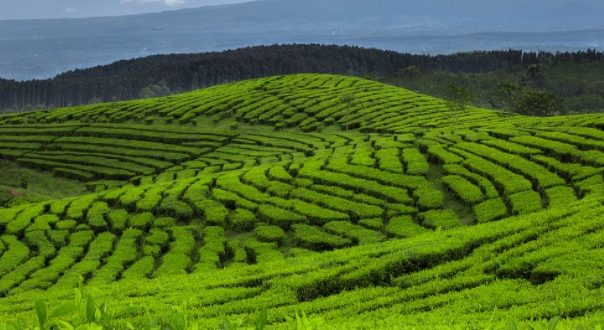 Rekomendasi Tempat Wisata di Lumajang